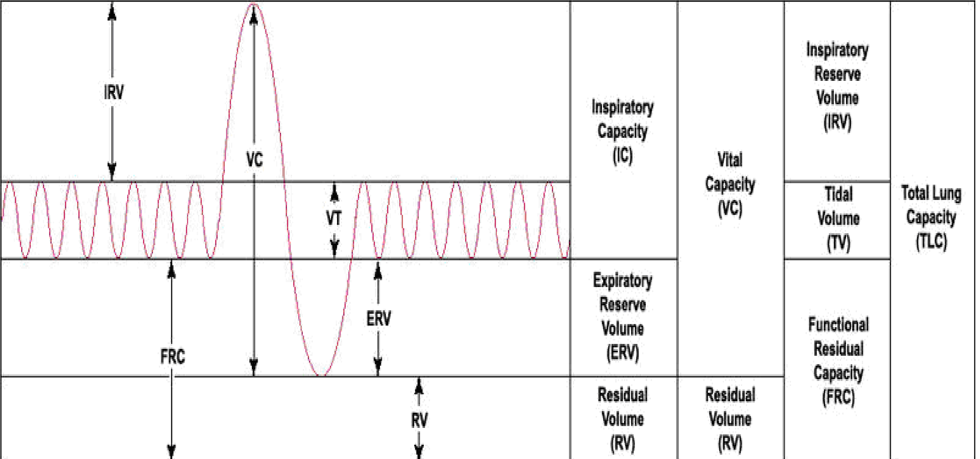 Respiratory system physiology lung volumes and capacities ccuart Choice Image