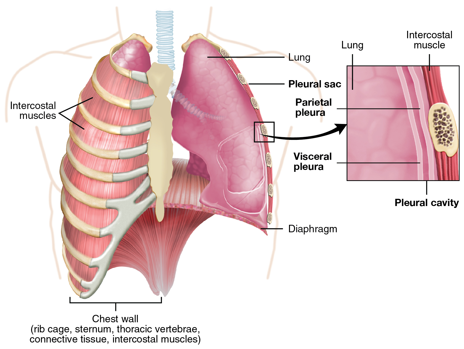 Chest Drains Indications Insertion And Management