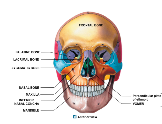 Skeleton further Foramen of the skull besides Skull Sagittal Section Diagram together with 13187 furthermore Trainee Advanced Clinical Practitioner Diary Day 3. on skull bone inferior view game