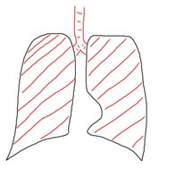 Normal Lungs- Normal inflation/deflation
